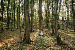 Маленькая девочка в лесе с папоротниками Стоковое Изображение RF