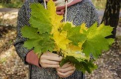 Маленькая девочка держа букет упаденных кленовых листов в руках Стоковое Фото