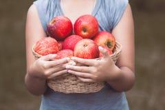 Маленькая девочка держа корзину яблок в саде Стоковые Фотографии RF