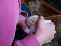 Маленькая девочка держа милого кролика младенца Стоковая Фотография