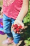 Маленькая девочка задерживая зрелую клубнику Стоковые Изображения