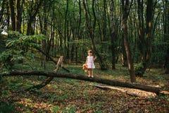 Маленькая девочка играя с ее медведем в древесинах девушка сидя дальше Стоковое Изображение RF