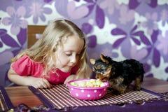 Маленькая девочка и щенок стоковое фото rf