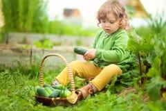 Маленькая девочка и корзина сбора весны с огурцами стоковые изображения rf