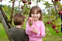 Яблоки рудоразборки Стоковая Фотография