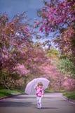 Маленькая девочка под зацветая вишневым деревом стоковое изображение rf
