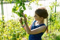 Маленькая девочка проверяя листья на зеленом дереве Стоковая Фотография