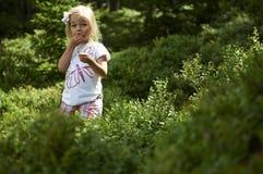 Маленькая девочка ребенка белокурая выбирая свежие ягоды на поле голубики в лесе Стоковое Фото