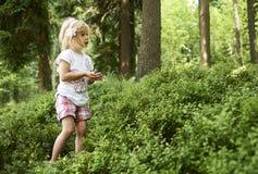 Маленькая девочка ребенка белокурая выбирая свежие ягоды на поле голубики в лесе Стоковое фото RF