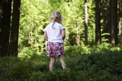 Маленькая девочка ребенка белокурая выбирая свежие ягоды на поле голубики в лесе Стоковая Фотография