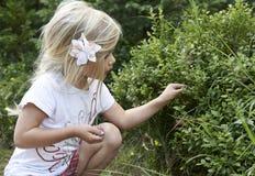 Маленькая девочка ребенка белокурая выбирая свежие ягоды на поле голубики в лесе Стоковые Изображения RF