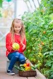 Маленькая девочка собирая огурцы и томаты урожая в парнике Портрет ребенк с большим сладостным зеленым peper в руках стоковое изображение