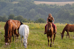 Маленькая девочка с лошадью Стоковые Фотографии RF