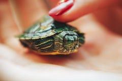 Маленькая зеленая черепаха Стоковое Изображение