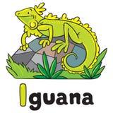 Маленькая игуана для ABC алфавит i Стоковое Изображение RF