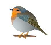 Маленькая изолированная птица Стоковые Изображения RF