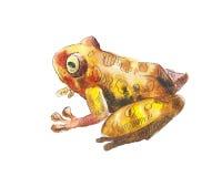 Маленькая коричневая акварель лягушки Чертеж акварели с коричневой лягушкой Стоковые Изображения RF