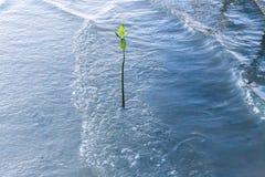 маленькая мангрова Стоковое Изображение
