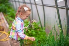 Маленькая милая девушка с сбором в парнике Стоковое Фото