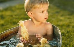 Маленькая милая игра мальчика с утенком в руках на яркой задней части Стоковое фото RF