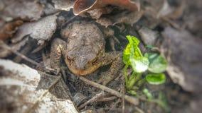 Маленькая милая лягушка Стоковые Фото