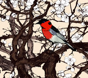 Маленькая мнимая красная птица в Сакуре Стоковые Изображения RF