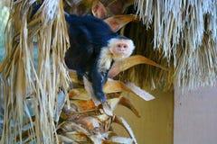 Маленькая обезьяна в дереве Стоковая Фотография