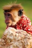 Маленькая обезьяна в рубашке Стоковое Изображение RF