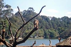 Маленькая обезьяна Стоковые Изображения