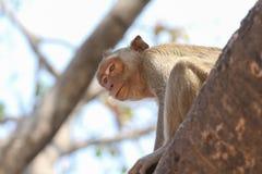 Маленькая обезьяна Стоковое Изображение RF