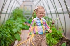 Маленькая прелестная девушка с сбором в парнике Стоковые Фотографии RF