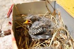 Маленькая птица в малой корзине на солнечном дне Стоковые Изображения