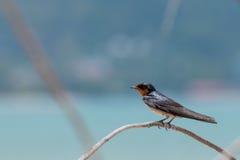 Маленькая птица на ветви Стоковое Изображение RF