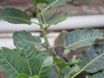 Маленькая птица на ветвях Стоковые Изображения