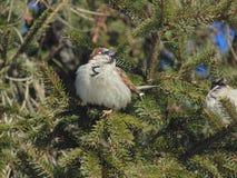 Маленькая птица на дереве Стоковые Изображения RF