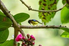 Маленькая птица на дереве Стоковая Фотография