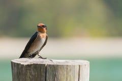 Маленькая птица на пне Стоковая Фотография RF