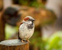 Маленькая птица на древесине Стоковые Изображения RF