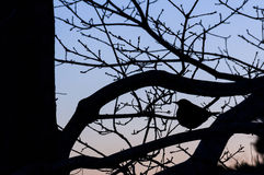Птица в дереве Стоковая Фотография