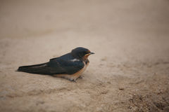 маленькая птица сидя на песке стоковые изображения