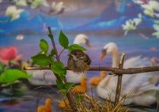 Маленькая птица с лебедями и флористической предпосылкой Стоковое Фото