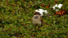 Маленькая птица Стоковая Фотография RF
