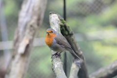 Маленькая птица Стоковые Фото