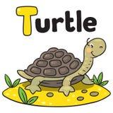 Маленькая смешная черепаха, для ABC Алфавит t Стоковые Фотографии RF