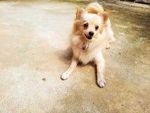 Маленькая собака Стоковые Изображения RF