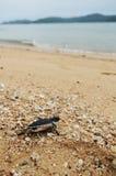 Маленькая черепаха идет океаны Стоковые Изображения RF