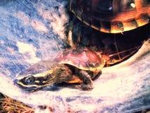Маленькая черепаха Стоковое Изображение