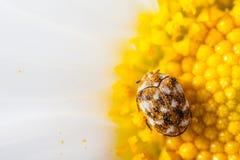 Маленькая черепашка стоковая фотография rf