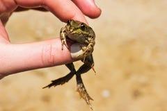 Маленькая лягушка в руке стоковые изображения rf