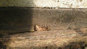 Маленькая лягушка между досками Стоковые Изображения